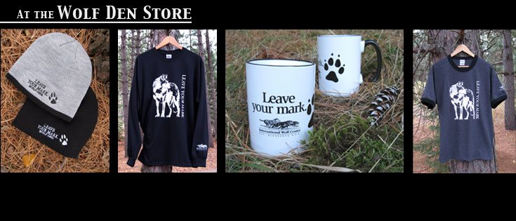 Article sur les loups 29344410