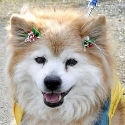 Le plus vieux chien du monde est mort Plus-v10