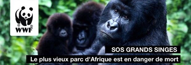 sos grands singes Sos_gr10