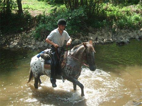 NOUVEAU CONCOURS PHOTOS : Les chevaux et l'eau - Page 2 Notika10