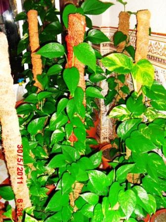 Mes plantes interieur ... 110