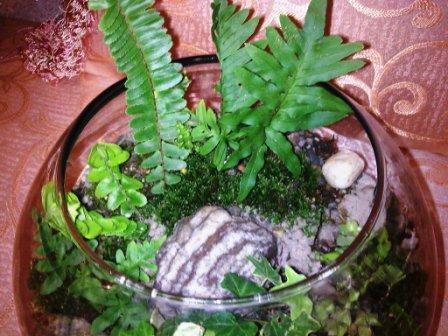 Terrarium à mur végétal 1110