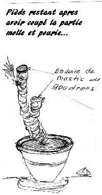Yucca 1_yuca10