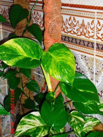 Mes plantes interieur ... 210