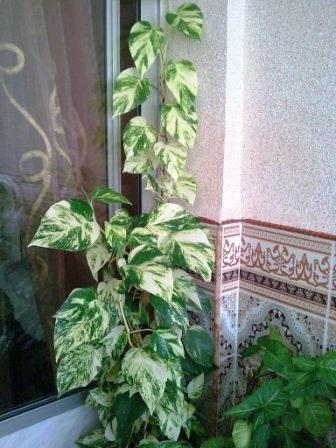 Mes plantes interieur ... 310
