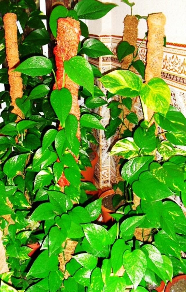Mes plantes interieur ... 411