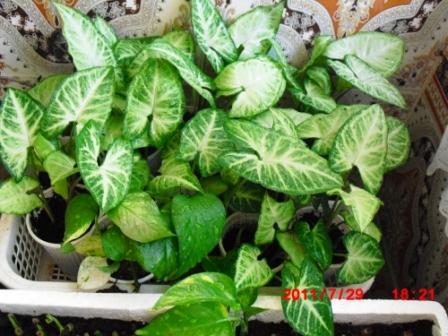 Mes plantes interieur ... 510