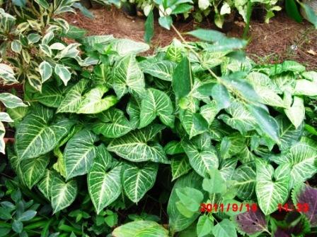 Mes plantes interieur ... 610