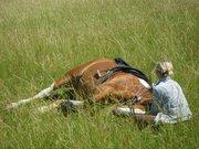 Thème juillet 2012 : Quand cheval rime avec poésie.... 24941310