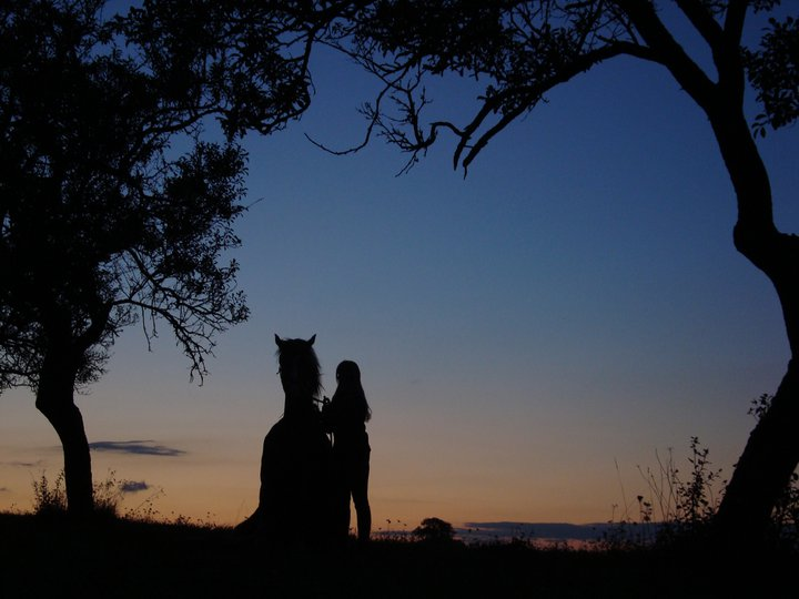 Thème juillet 2012 : Quand cheval rime avec poésie.... 30152910