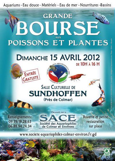 Bourse aux poissons à Colmar - 15 Avril 2012 Bourse11
