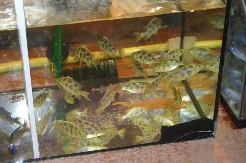 Bourse aux poissons à Metz Plantières le 18 septembre11 - Page 2 Img_4735