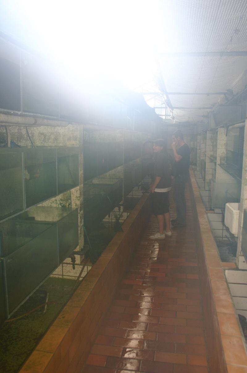 Sortie aquafarm-paradise le 1/10/11 à 14H - Page 4 Img_4820