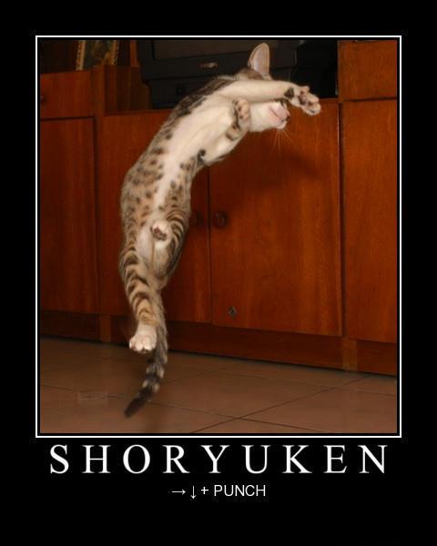 Les délires de Maître Adapa - Page 2 Shoryu10