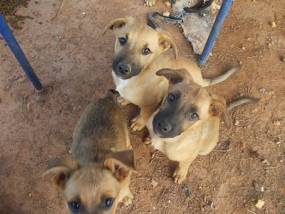 7 cachorritos en la calle esperan un hogar Dscn1110