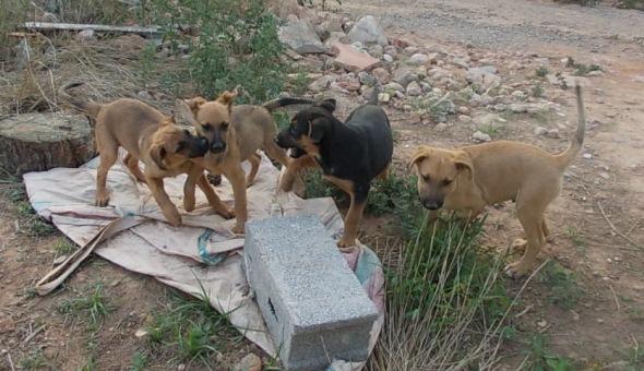 7 cachorritos en la calle esperan un hogar Dscn1111