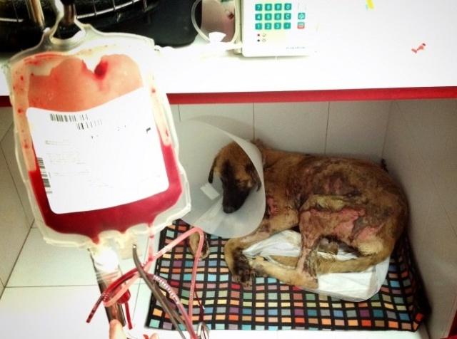 Tidus otro perro quemado (Valencia) Perro-11