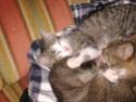 petits chatons recherchent maison d'adoption Dsc01310