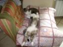petits chatons recherchent maison d'adoption Dsc01511