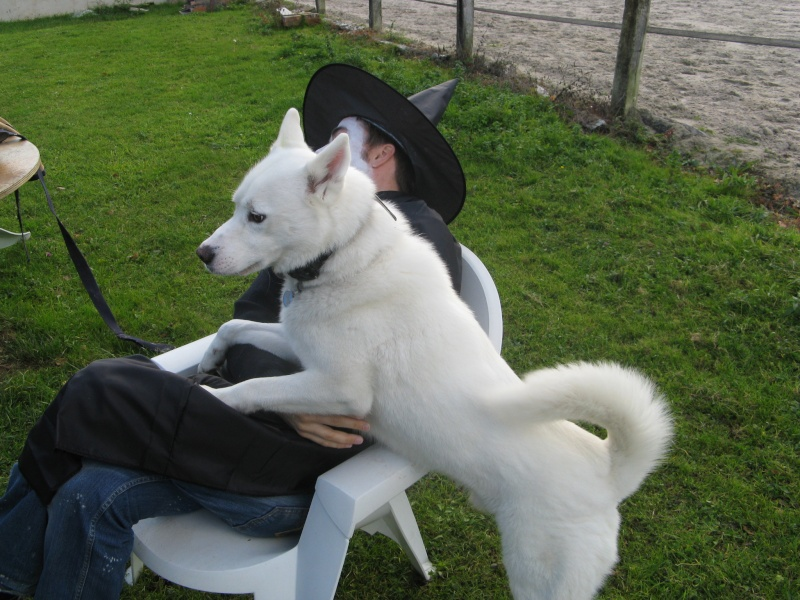 COSMO husky de 5 ans en FA en Sarthe  Cosmo10