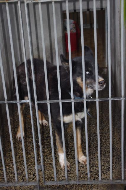 TIT LOOV & PESSE - Husky 9 & 11 ans abandon REF:62  DECEDES Male110
