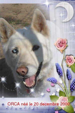Orca, Husky, âgée de 14 ans née 20 Décembre 2000,  Eden Valley  ASSO39 - Page 3 Orca11