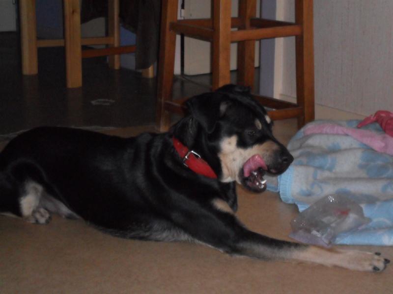 """Cool, jeune chien """"Royal Bourbon"""" né en septembre 2010 (10) Sam_0344"""