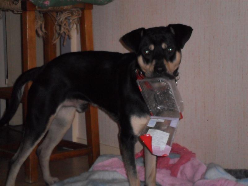 """Cool, jeune chien """"Royal Bourbon"""" né en septembre 2010 (10) Sam_0345"""