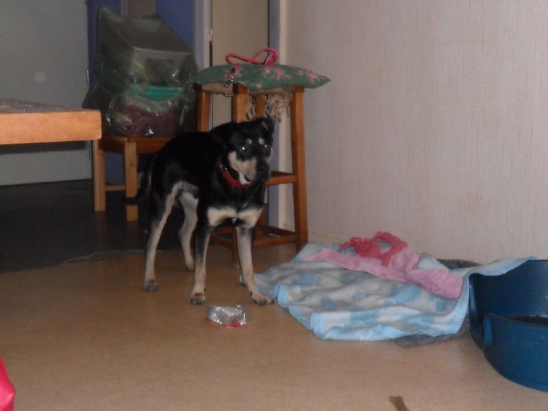 """Cool, jeune chien """"Royal Bourbon"""" né en septembre 2010 (10) Sam_0346"""
