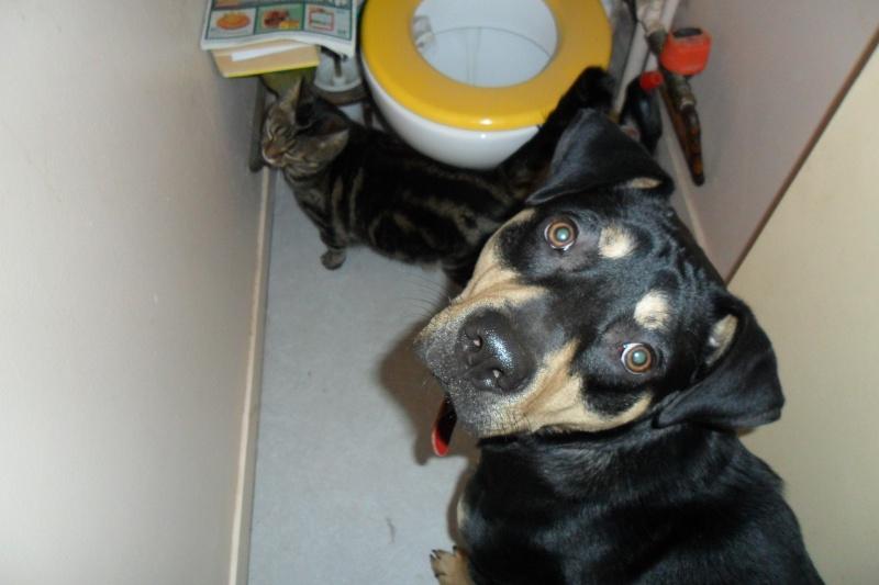 """Cool, jeune chien """"Royal Bourbon"""" né en septembre 2010 (10) Sam_0410"""