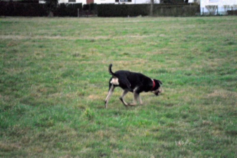 """Cool, jeune chien """"Royal Bourbon"""" né en septembre 2010 (10) Sam_0414"""