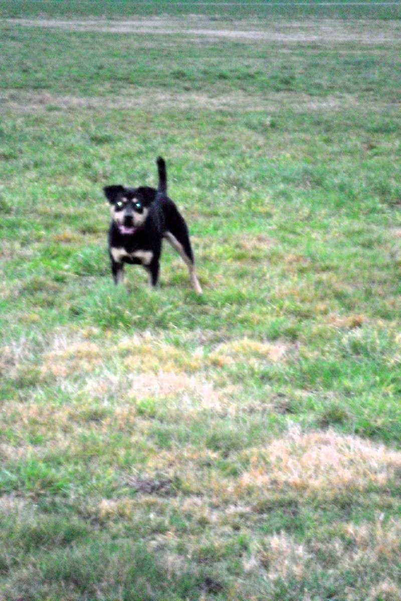 """Cool, jeune chien """"Royal Bourbon"""" né en septembre 2010 (10) Sam_0415"""