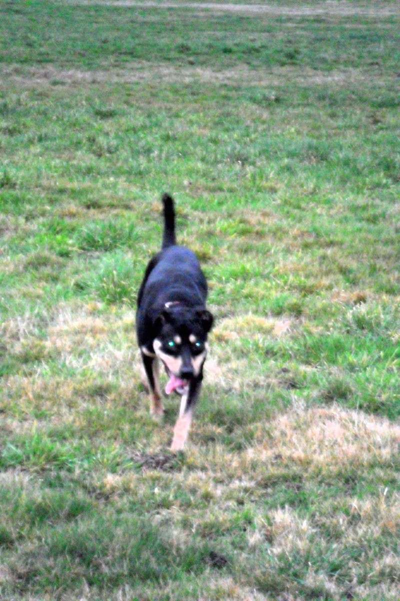 """Cool, jeune chien """"Royal Bourbon"""" né en septembre 2010 (10) Sam_0416"""