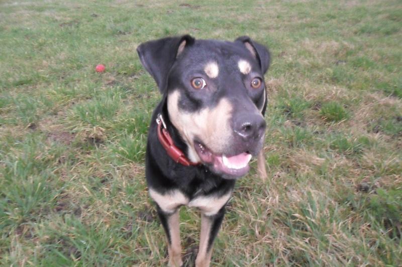 """Cool, jeune chien """"Royal Bourbon"""" né en septembre 2010 (10) Sam_0417"""