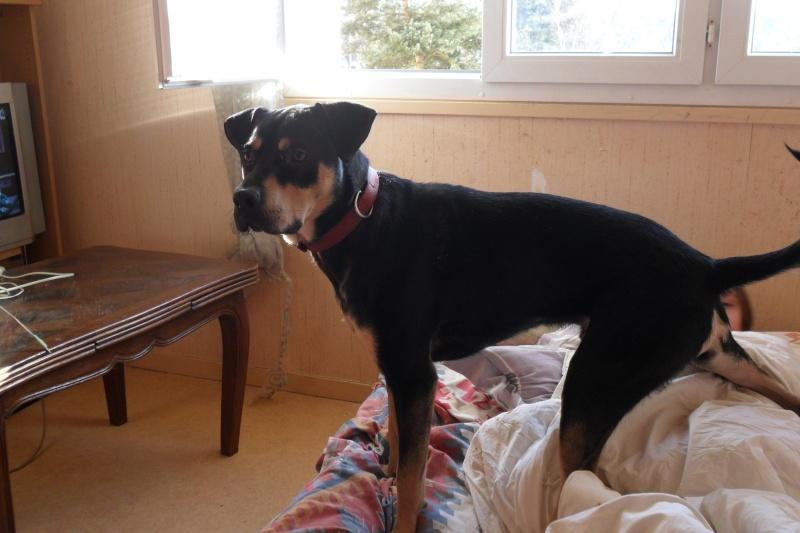 """Cool, jeune chien """"Royal Bourbon"""" né en septembre 2010 (10) - Page 2 Sam_0420"""