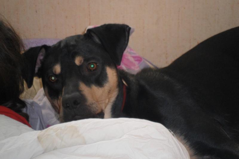 """Cool, jeune chien """"Royal Bourbon"""" né en septembre 2010 (10) - Page 2 Sam_0421"""