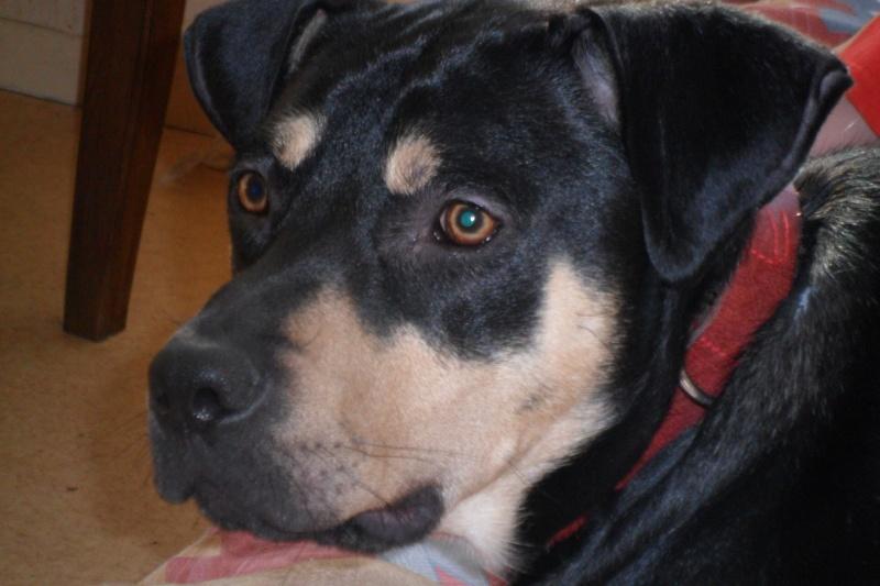 """Cool, jeune chien """"Royal Bourbon"""" né en septembre 2010 (10) - Page 2 Sam_0422"""