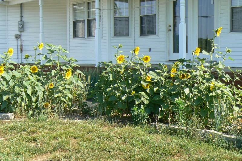 Non - garden P1030011