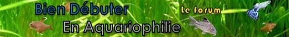 Reptiliomorpha Bien_d12