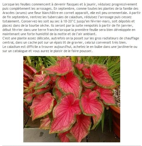 plantes proche radiateur Sans_t20