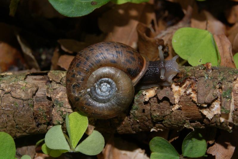 Avez-vous vu l'escargot de Quimper ? Dsc05710