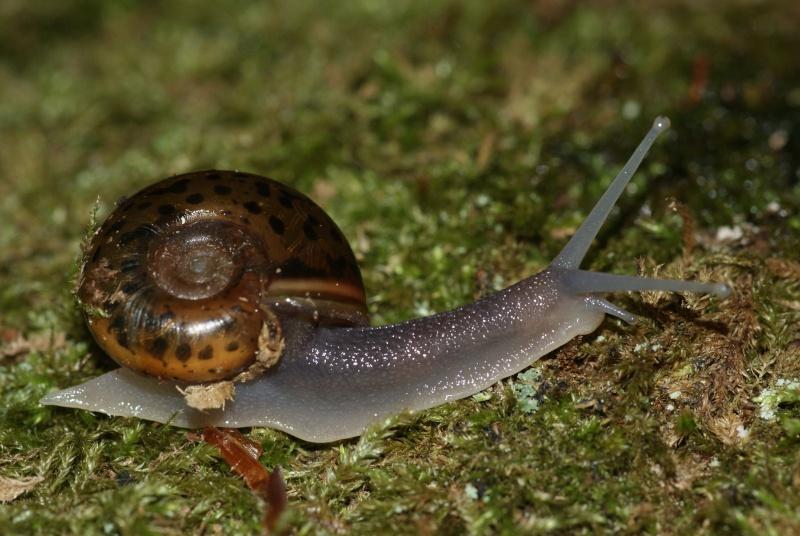 Avez-vous vu l'escargot de Quimper ? Dsc07011
