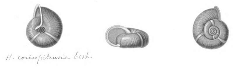 Avez-vous vu l'escargot de Quimper ? Feruss11