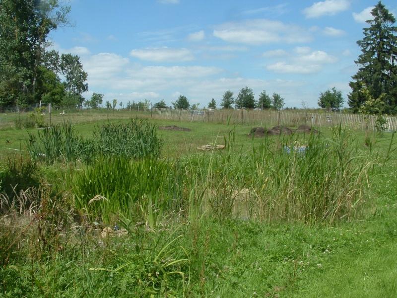 une petite vue du jardin Dscf0010