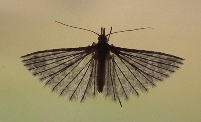 quel est cet insecte Dscf3411
