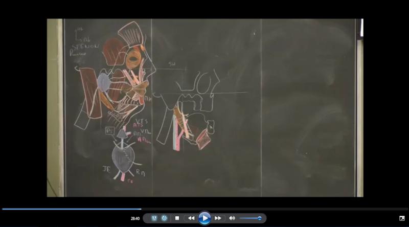 anatomie - L'anatomie de la face (vidéo) Anatom10