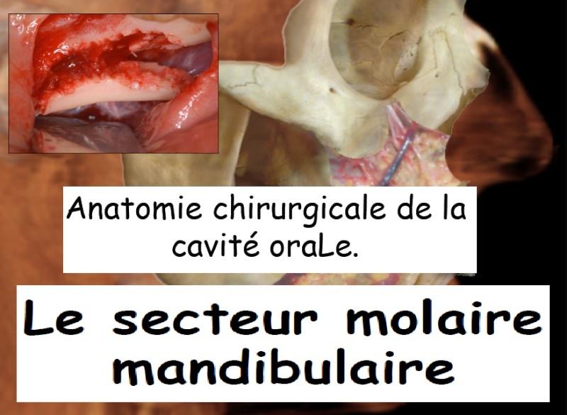 anatomie - Anatomie chirurgicale de la cavité orale : le secteur molaire mandibulaire Sans_t13