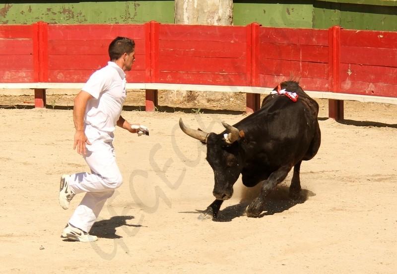 6° Cigale d'Or  Concours de Manades  AIGUES VIVES  13-05-2012 6a_cig11