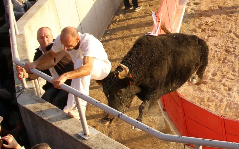 GALLARGUES le MONTUEUX  Course Avenir HT 13-11-2011 Concou15