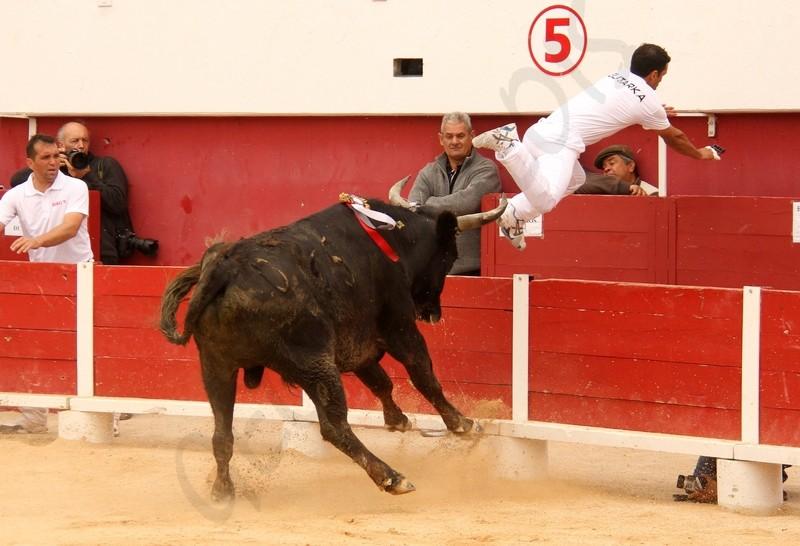 Concours de Manades PALAVAS  08-05-2012 Concou20